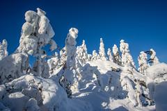 Koli - Finland (Sami Niemeläinen (instagram: santtujns)) Tags: lieksa suomi finland luonto nature metsä forest talvi winter lumi snow ice jää tykkylumi puu tree pielinen maisema landscape hiking trekking pohjoiskarjala north carelia kansallispuisto kansallismaisema national park visitkoli
