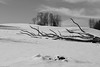 lying trees in snow (picturesbywalther) Tags: lying trees liegend bäume sw bw schwarzweiss blackwithe landscape landschaft art nikon winter schnee snow