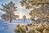Frost on the Pines- #393 (DBruner240) Tags: frost nd north dakota sunrise snow grand forks ngc sun halo sundog winter