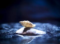 in the bokeh sea (Ichi De) Tags: sea shells light clouds bokeh smoke stilllife pentacon vintagelens nature manualfocus blue