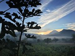 Sunrise (VillaRhapsody) Tags: sunrise mountain branches tree fig babadag kayaköy fethiye sky rural field