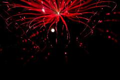 Starfish (thatyoungman) Tags: night fireworks starfish lights red