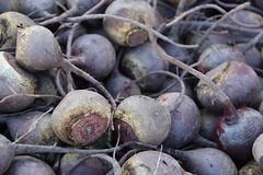 DSC_4528 (earthdog) Tags: 2018 needstags needstitle nikon d5600 nikond5600 farmersmarket campbell food edible