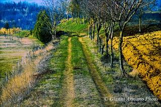 Nel cuore di ogni inverno c'è una primavera palpitante #Esplora#