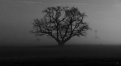 Im Nebel... (st.weber71) Tags: nikon d850 nebel niederrhein blackandwhite schwarzweis sw bw landschaft landscape natur baum bäume lzb langzeitbelichtung nightshot outdoor germany deutschland strommast nachtfoto nachtfotografie