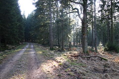 DSC08771 (Bike and hiker) Tags: jalhay hertogenwald gileppe
