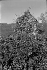 _dsc8651jpg_10368994274_o (idreamedof) Tags: 23 35105mmafii af adonal agfa agfavistaplus200 alpha bw bwfilm cairngormsnationalpark dynax60 highlandsofscotland minolta rodinal rothiemurchus scotland scottishhighlands uk abandoned analogue architecture building choked colourfilm developer dilapidated farmhouse film house lens old overgrown resolution ruin tinroof weathered wood wooden zoom