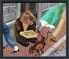 Stuttgart - Neue Staatsgalerie (skaradogan) Tags: stuttgart stoccarda estugarda badenwürttemberg badewurtemberg bádenskowürttembersko badenwurtemberg badeniawirtembergia germany allemagne deutschland alemania germania duitsland tyskland alemanha niemcy německo may2017 staatsgalerie neuestaatsgalerie museum musée modernart artmoderne artwork ottodix dix