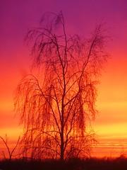 Rainbow Sunset (Sunderland Shutterbug) Tags: nature natur baum arbre tramonto sonnenuntergang puesta de sol puestadesol solnedgang pordosol machlud 日落 日没 auringonlasku zalazaksunca ਸੂਰਜ ਡੁੱਬਣਾ ਸੂਰਜਡੁੱਬਣਾ napnyugta washington uk panasonic lumix