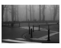U N T I T L E D  [ F O G  # 1 ] (bruXella & bruXellus) Tags: parcduden brüssel bruxelles brussels brussel belgien belgique belgium belgië leicax1 blackwhite bnw monochrome brume brouillard nebel fog