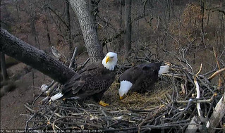 Okay, okay. We know you want to see an egg! Patience, please.