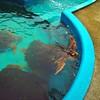 Projeto TAMAR / Ubatuba (Sereiazinha Si) Tags: tartaruga projetotamar educaçãoambiental environmentaleducation animal brazil brasil captiviity cativeiro conservation conservação biodiversidade biodiversity