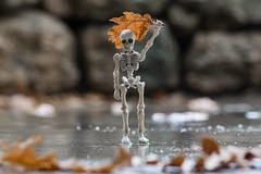 Under the rain... (EatMyBones) Tags: miniature poseskeleton rement skeleton toy toyphotography rainyday rain leaf
