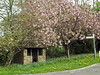 Horsington Bus Stop (Cornishcarolin. Thank you for over 2 Million Views) Tags: somerset horsingtonbusstop busstops cherrytrees blooms trees building