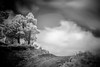 Take the long road and walk it (iramortega) Tags: landscape nature black white trees naturescape mexico ir infrared abstract photo