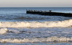 baltic sea cormorants (kexi) Tags: polska poland polen sea baltic balticsea birds cormorants horizon waves water december 2016 canon white blue group flock sitting instantfave wow chalupy