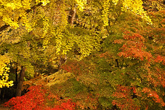 Korea:  A Painting Of Autumn (doug-craig) Tags: asia korea color autumn travel stock nikon d700 journalism photojournalism dougcraigphotography coth nationalgeographic colorsinourworld coth5 ngc flickrtravelaward