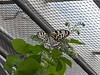 Farfalle al Giardino botanico (Nicola.Zunino) Tags: farfalle schmetterlinge butterflies monacodibaviera munich münchen botanischergarten giardinobotanico