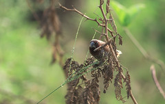 Bird Watching (malhotraXtreme) Tags: hampi india karnataka bangalore trip travel colour tone dslr sony