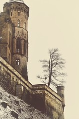 The lonely Tree (DrQ_Emilian) Tags: castle building architecture old historical bricks tree lonely one alone outdoors nature light color details view travel explore discover visit hohenzollern bissigen tübingen badenwürttemberg germany europe tower wal