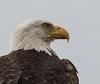 Looking Up to an Eagle (Mark Schocken) Tags: halliaetusleucocephalus americanbaldeagle joeoverstreet markschocken