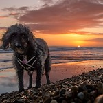Dog Walk at Sunset thumbnail