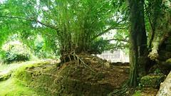 CAMBOYA (Grace R.C.) Tags: camboya angkor ruinas ruins temple arqueología antigüedad