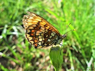 Butterfly 1609