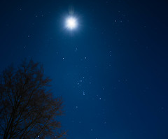Orion (alexander_skaletz) Tags: night winter tree nightscape landscape landscapephotography astrophotography spacephotography natur photography moon dark cold blue sky nightskys village nightshot starrynight orion space february germany nikon nikond5300 stars