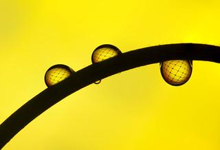 Fishnet droplets