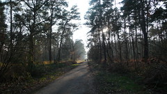 Une ballade en forêt du Madrillet et du Rouvray (jeanlouisallix) Tags: rouen saint etienne du rouvray le madrillet seine maritime haute normandie france forêt foest arbres sylviculture sousbois sentiers randonnée nature paysages landscape panorama