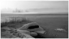 Morning Fog (B&W) (Krogen) Tags: norge norway norwegen akershus romerike ullensaker nordbytjernet winter vinter krogen motorolag5plus smartphone bw blackwhite svarthvitt svhv silverefexpro