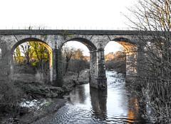 The Viaduct, Larbert (picsbyCaroline) Tags: viaduct bridge water river tree train arch