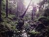 Nimetön puro - Brook without a Name (Lauri S Laurén) Tags: suomi nature nightphoto pirkanmaa summer forest finland taiga woods tree trees water puro creek kesä green laurilaurén art artphoto photoart metsä sunlight