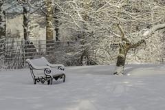 Snow Snow.... (Anna.Andres) Tags: 2018 reykjavík snjór grasagarður annaguðmundsdóttir snow winter iceland ísland