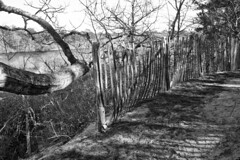 Completing the Fence (brucetopher) Tags: beechforest trail hike outdoor winter walk woods forest wilderness park natural path fence fencing edge pathway pond water lake marsh wetland wetlands watery damp shadow black white blackandwhite bw blackwhite monochrome mono fencedfriday fenced