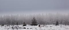 High Fens 07 (L I C H T B I L D E R) Tags: belgium winter tree trees stamm trunk belgien baraque michel hohesvenn highfens eupen malmedy hautesfagnes wood forest snow wald holz baum schnee landschaft baraquemichel bedeckt park