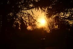_DSC5552 (The Unofficial Photographer (CFB)) Tags: deardiaryfeb2018 carshalton featheredfriends sunrise