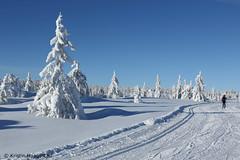 Cross country skiing (K. Haagestad) Tags: skitracks trees pine sky mountains sjusjøen norway snow winter