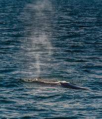 To breathe! (Pep Peñarroya) Tags: iceland whale