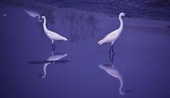 DSC_0100 (bala_victoryy) Tags: bird watch chennai nikon besant nagar d5300 cwc