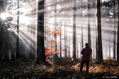 Solo ante la implosión de LUZ (Jabi Artaraz) Tags: jabiartaraz jartaraz zb euskoflickr haya abeto bosque luz light amanecer bruma niebla nature jon fotógrafo basoa explosión implosión argia sun