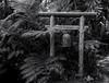 Tropical bell. (Tim Ravenscroft) Tags: bell japanese foliage gardens selbygardens sarasota florida hasselblad hasselbladx1d x1d black white monochrome