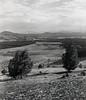 Canberra (deathiscertainitshouruncertain) Tags: gf670 mediumformat hp5 ilford canberra arboretum