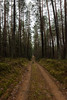 A Lonely Road (modestmoze) Tags: road lonely lines leadinglines outside outdoors explore travel lithuania 2017 500px winter december green grass trees high sky tall many woodland nature naturephotograph naturelove view beautiful dog pet black sand alytus white interesting
