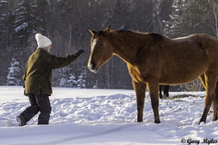 chevaux (myles_gary) Tags: hiver cheval