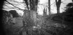 Ivy pinhole (Mark Dries) Tags: markguitarphoto markdries holga wpc pinhole 6x12 ilford fp4 rodinal 125 1000 10 avebury uk