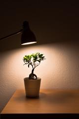 Lamp (LukeHezekiah) Tags: plant green lamp light contrast desk plants