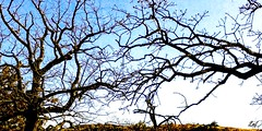 Dancing... (lillypotpie) Tags: treebranches dancing