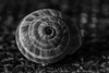 Snail (andbog) Tags: sony alpha ilce a6000 sonya6000 mirrorless csc sonya manual vintagelens classiclenses mf manualfocus primelens sonyα emount sonyalpha italy italia it manualfocusing sony⍺6000 sonyilce6000 sonyalpha6000 ⍺6000 ilce6000 apsc sigma 90mm inner indoor interior f28 90mmf28 sigma90mmf28macro longexposure macro closeup sigmalens shell conchiglia snail monochrome biancoenero blackandwhite bn bw silverefexpro2 googlenikcollection